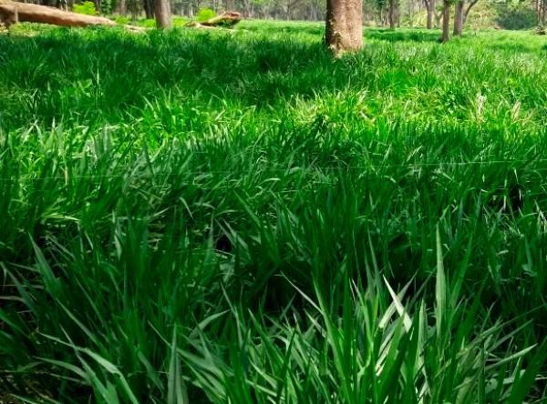 Semillas híbridas, una solución frente al cambio climático